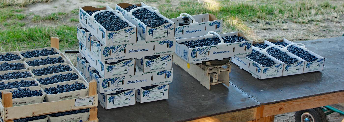 Mühlenhof Wittenwater - Heidelbeeren