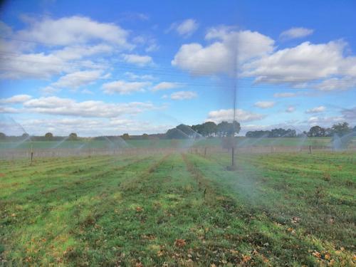 Mühlenhof Wittenwater - Heidelbeeren - Beregnung