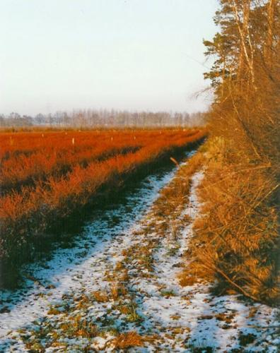Mühlenhof Wittenwater - Blaubeeren - Altanlage Winter