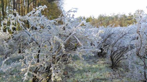 Mühlenhof Wittenwater - Blaubeeren - Altanlage - Frost im Winter