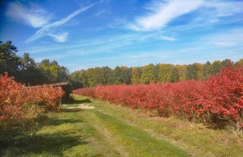 Mühlenhof Wittenwater - Heidelbeeren - Herbstfärbung