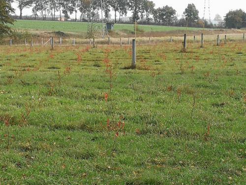 Mühlenhof Wittenwater - junge Heidelbeerpflanzen